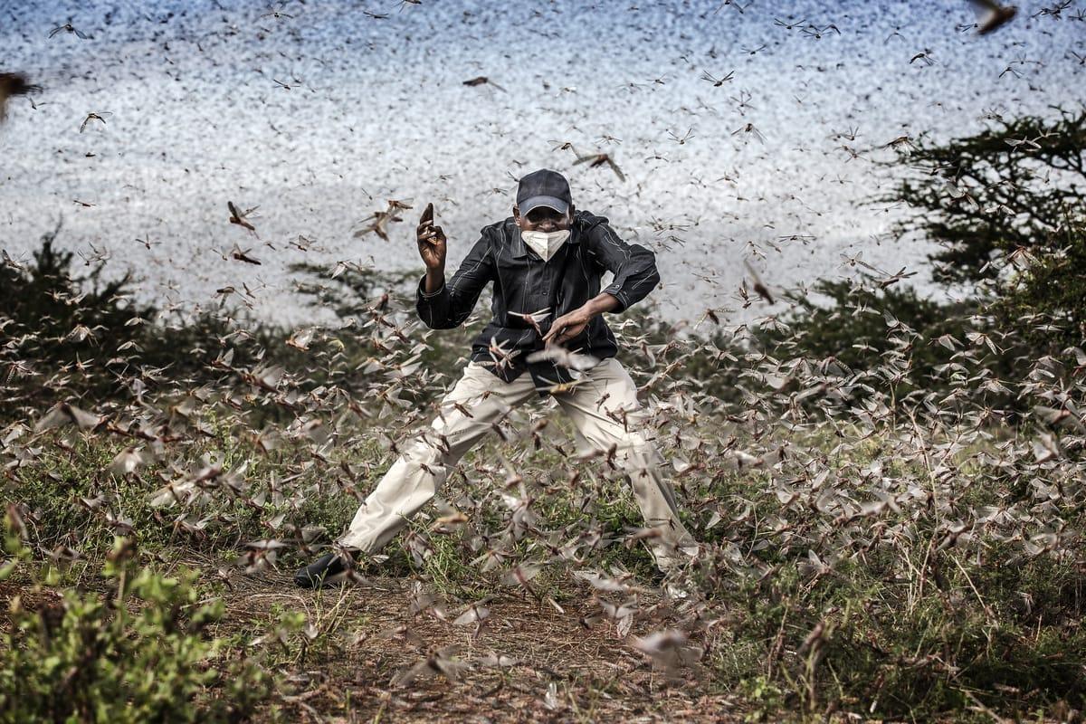 Mann kämpft gegen eine Heuschreckenplage in Kenia an