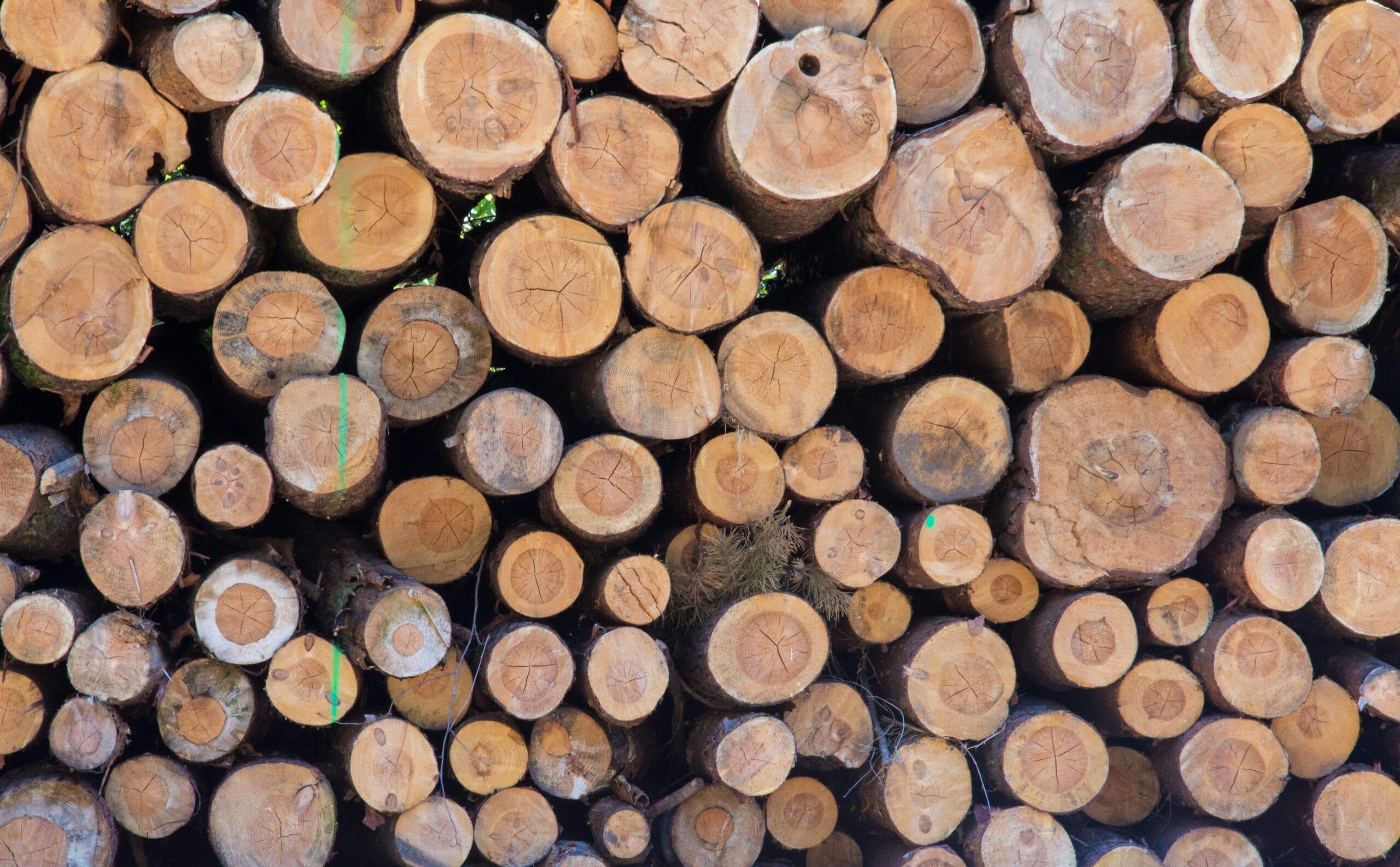 Kampf ums deutsche Holz: 42,6 Prozent mehr Rohholz exportiert
