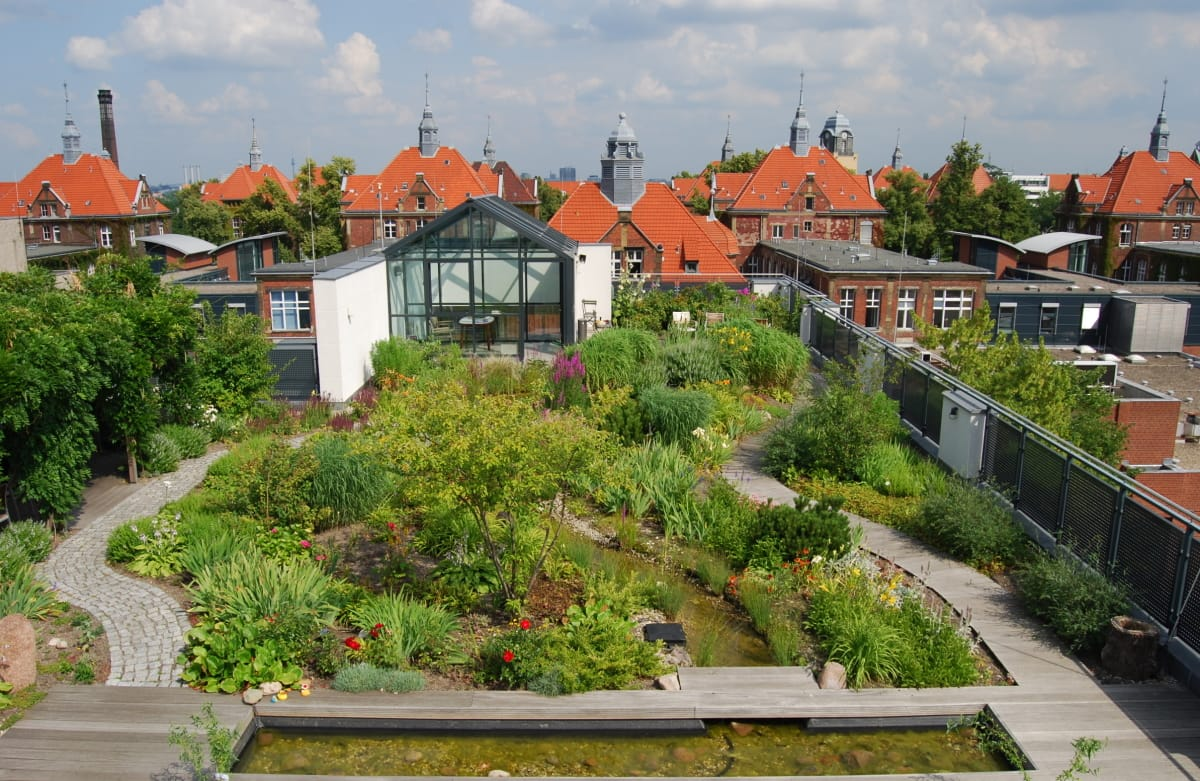 Dachbegrünung: Dachdecker entdecken grünen Daumen
